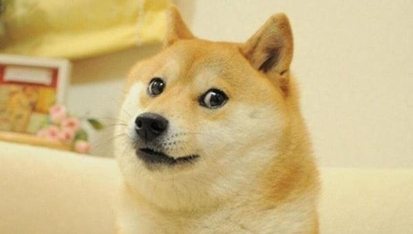 Famosa plantilla de doge de Momos Shiba Inu