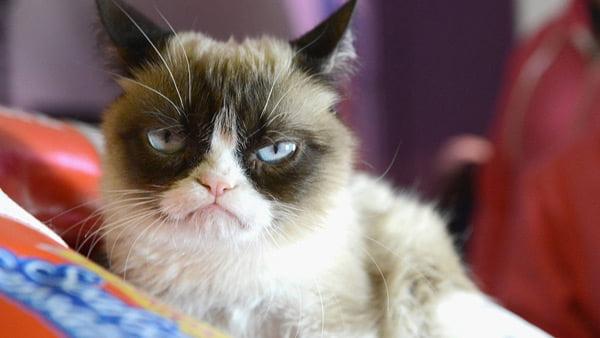 Plantillas de memes de gato enfadado y malhumorado